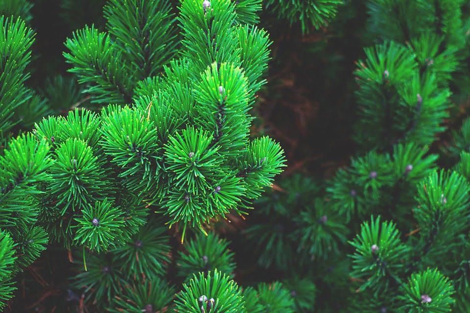 Produk Dropship Evergreen